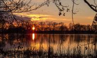 Bei Sonnenuntergang ziehen Enten, Schwäne und Gänse von den Feldern auf die Teiche. Foto: Dirk Weis